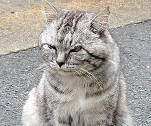 宝当神社 猫