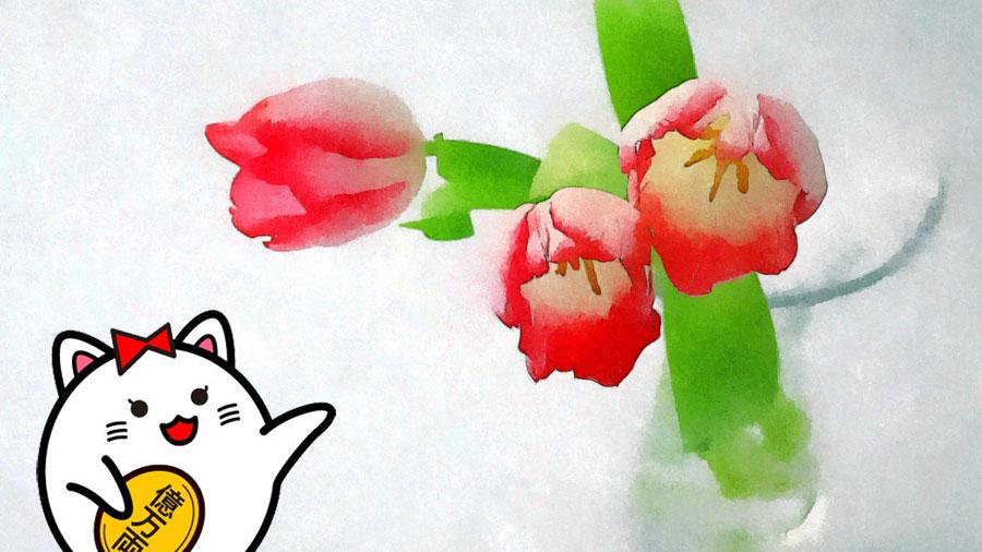 玄関 風水 観葉植物