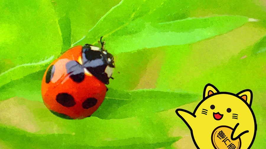 てんとう虫(天道虫)